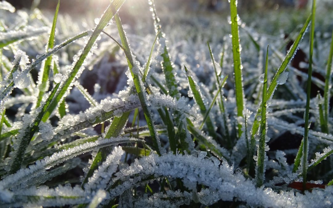 How to Avoid a Frozen Septic System this Winter