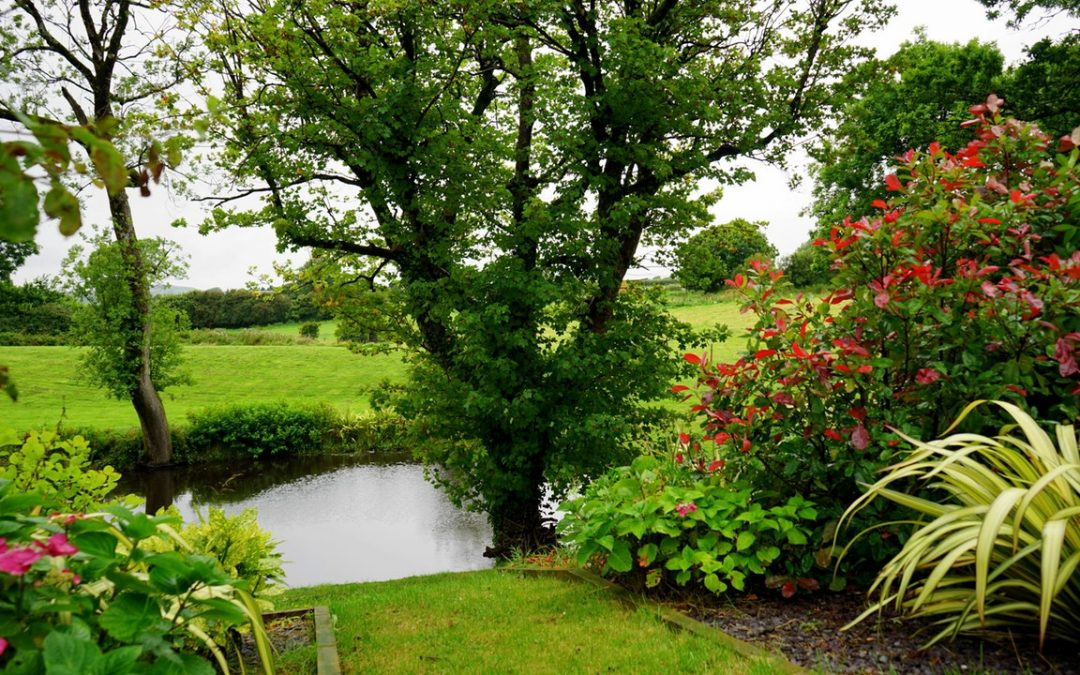 Landscaping Around a Septic System: Remember These Do's and Don'ts